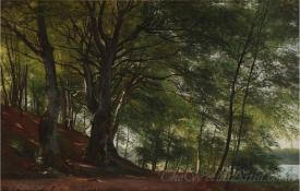 Forest Scene From Soro Denmark