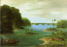 A Jaguar Hunt Brazil