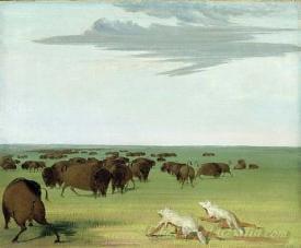 Buffalo Hunt Under The Wolf Skin Mask