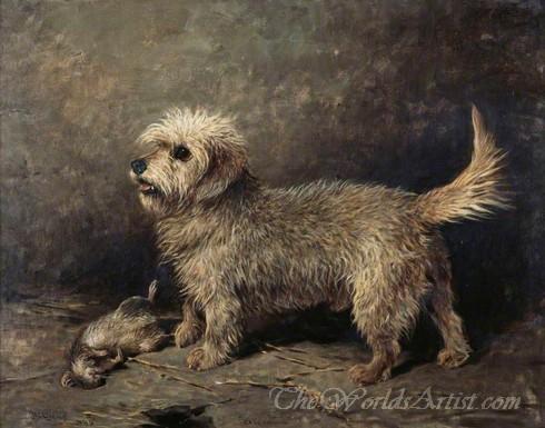 Callum A Dandie Dinmont Terrier
