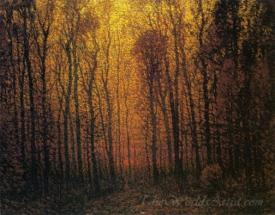 Deep Woods In Fall