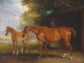Defiance A Brood Mare With Reveller A Foal