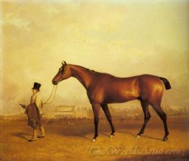 Emlius Winter Of The Derby Held By A Groom At Doncaster
