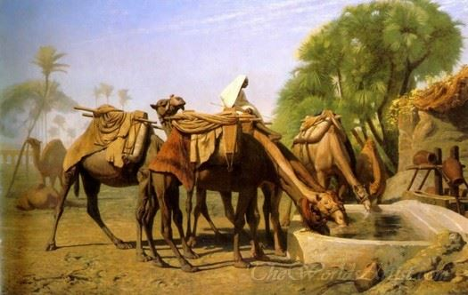 Camels At A Watering Trough