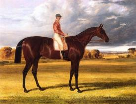 Amato 1838 Derby Winner