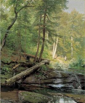 Bear Approaching A Forest Stream