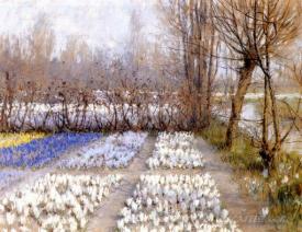 Spring Crosuc Fields