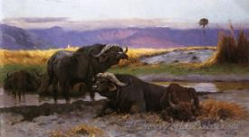 Buffalo Along The Riverbank