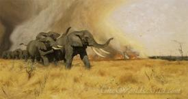Elephants Moving Before A Veldt Fire