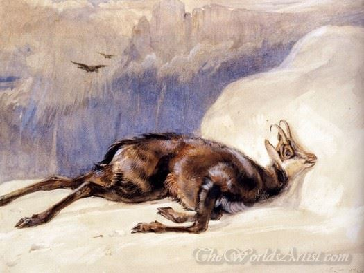 The Chamois Sketched In The Tyrol