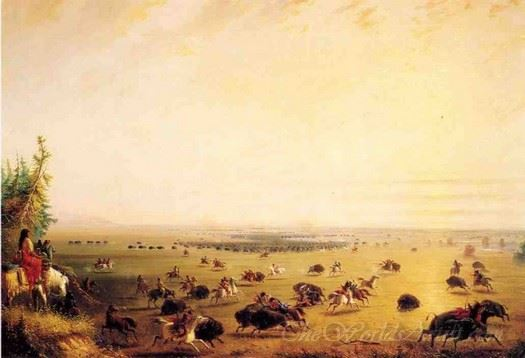 A Surround Of Buffalo By Indians