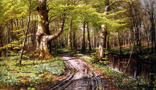 Forest Scene With Streams
