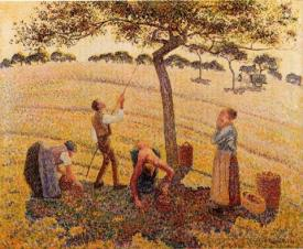 Apple Harvest At Eragny