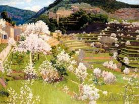 Terraced Garden In Mallorca  (Almond Blossom)