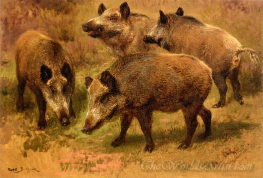 Four Boars In Landscape