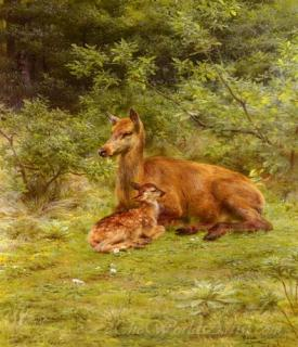 Doe And Fawn In A Thicket