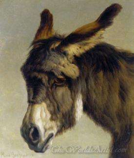 Head Of A Donkey