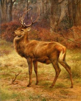 Stag In Autumn Landscape