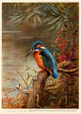 Summer Kingfisher