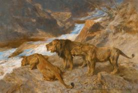 Lions By A Stream