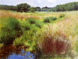 Marshland Medfield