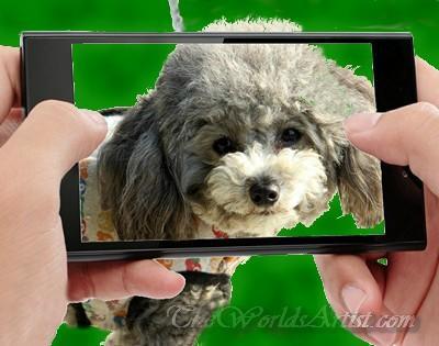 good photo for a good oil pet portrait